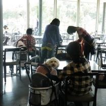 【ワンちゃんも一緒に♪】小・中型犬用のレンタルカートご用意しております。