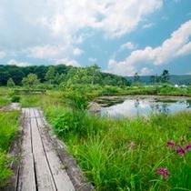 【湿地園】朝起きて、湿地帯周辺のお散歩はいかがですか?