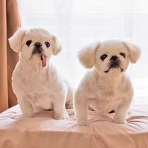 愛犬専用ベット