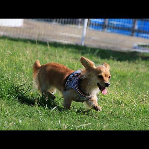 楽しそうに走り回るワンちゃんと当館の野外ドッグランを満喫♪