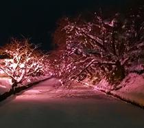 弘前城 冬の桜