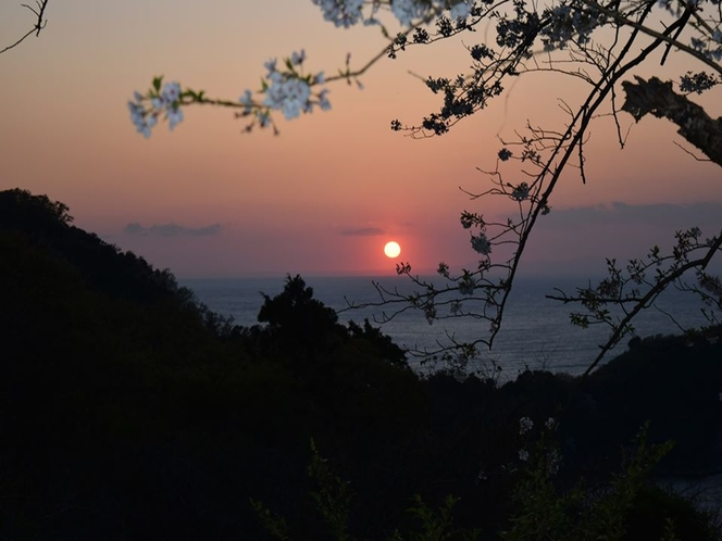 夕陽と桜と海の三位一体