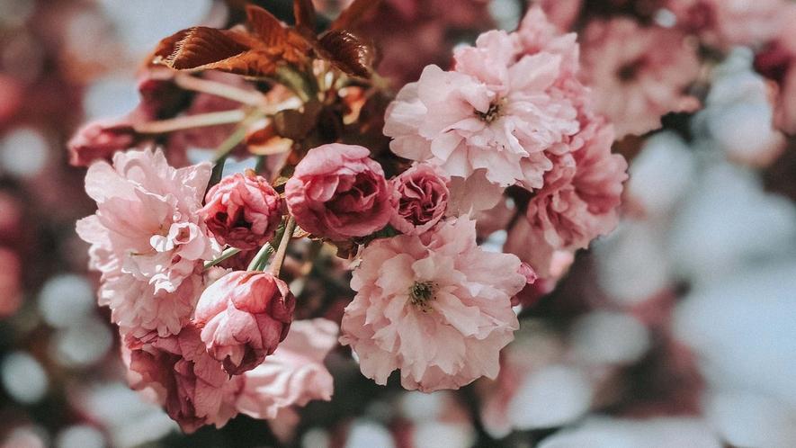 ・春には美しい桜もご覧いただけます。
