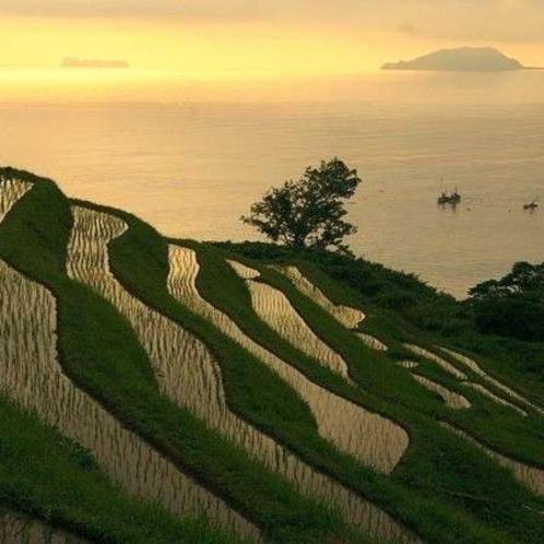 海岸線を見下ろす斜面に作られた20面に及ぶ「新井の棚田」。日本海の景色と日の出をお楽しみいただけます