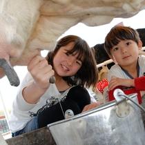 マザー牧場は当館から車で約30分になります。乳牛の乳搾り体験