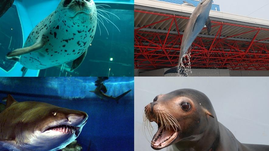 【周辺】しながわ水族館