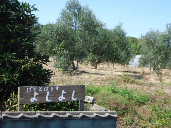 看板の北側はオリーブ畑