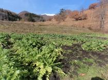 畑の景色はとてもきれいで癒されます