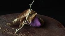 *夕食一例/紫芋のキントン-焼き芋見立て