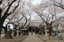 【周辺案内】「法華経寺」徒歩10分