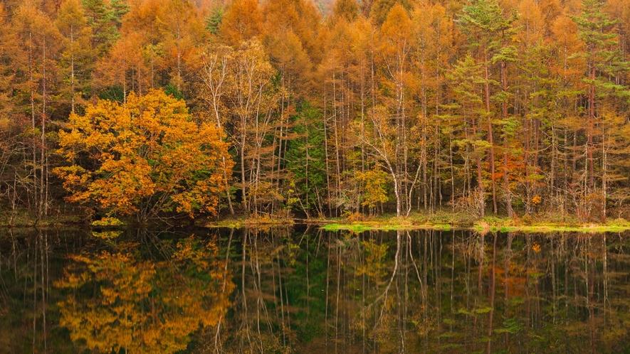 【周辺】紅葉の蓼科湖。
