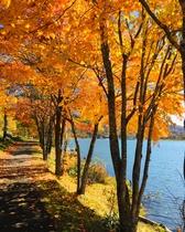 女神湖周辺の紅葉