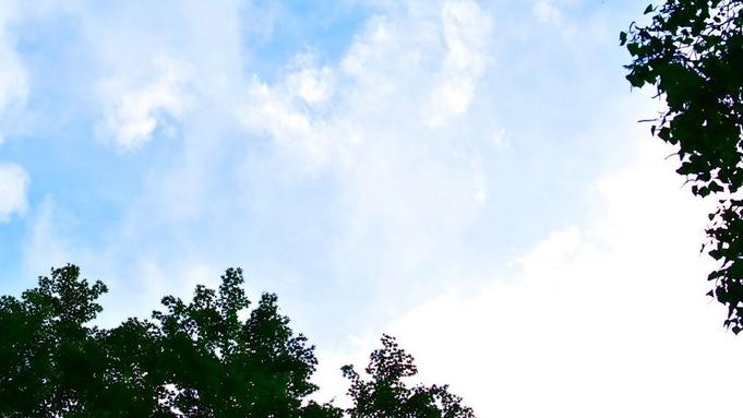 【室数限定】【夏休み・森の自由研究!】森に遊び、森に学ぶプログラムでお子様の学びを応援します!