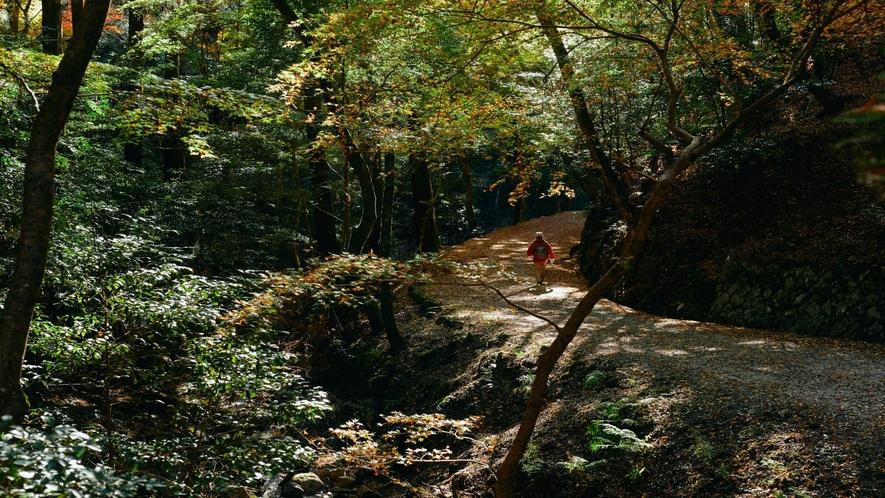 秋の春日山原始林