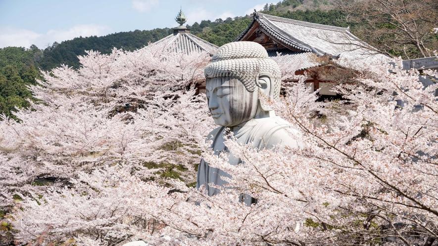 壷阪寺 春