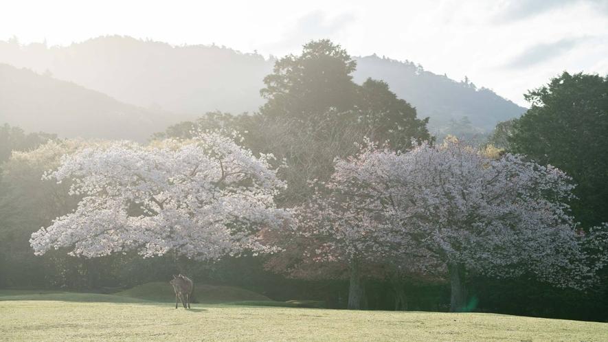 奈良公園 春