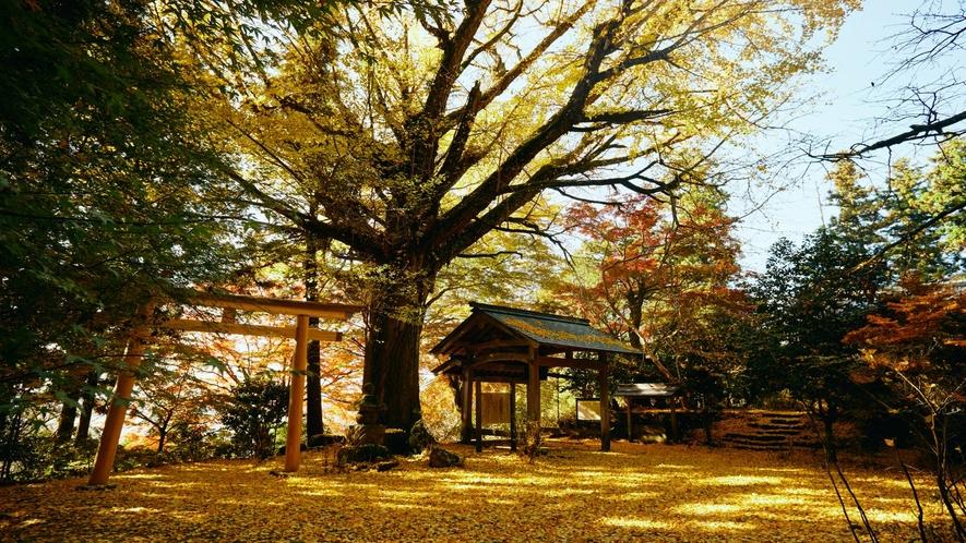 秋の戒長寺