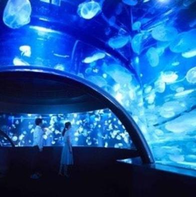 【京都水族館へ行こう!】☆話題の新エリア・クラゲワンダー☆イルカパフォーマンスも大人気!!