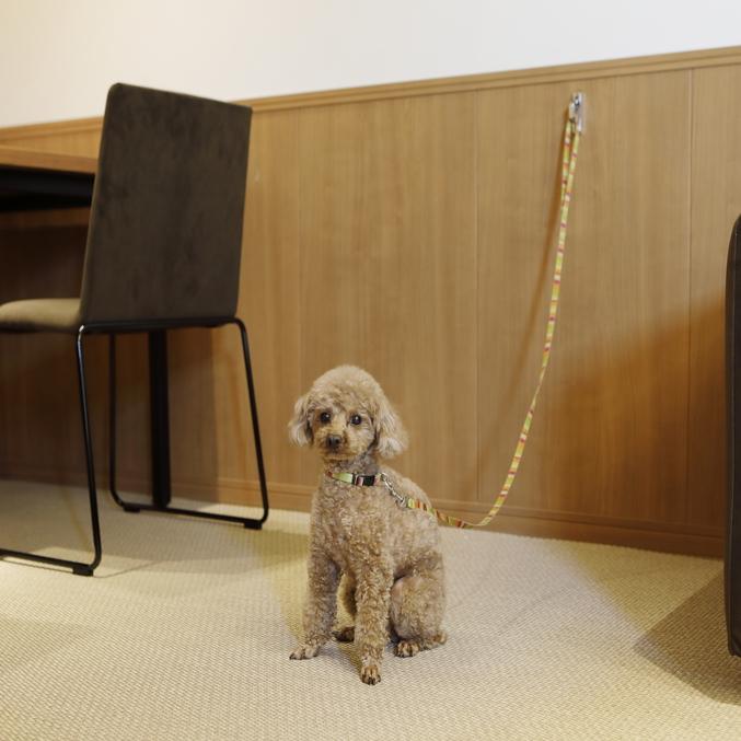 お部屋の各所にリードフックがあるので、お転婆な愛犬も安心