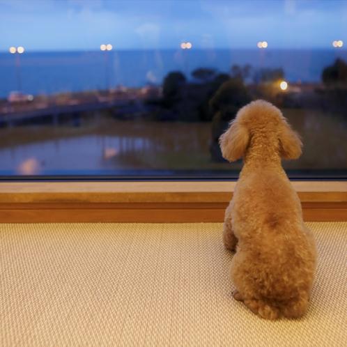 愛犬も外の景色を楽しめるような大窓になっております