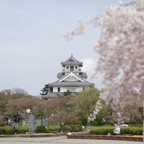 豊公園は、長浜城歴史博物館を囲むように桜の木が植えられています。