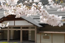 藤龍館 桜