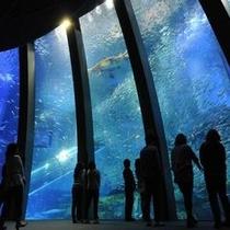 【観光情報 八景島シーパラダイス】水族館 国内最多5万尾のイワシの大群泳には大人も興奮してしまいます
