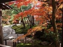 紅葉の足立美術館