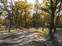 キャンプ場の秋