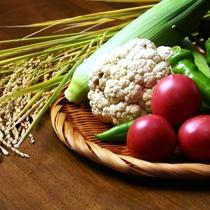 鮮度抜群の自家製お野菜&お米