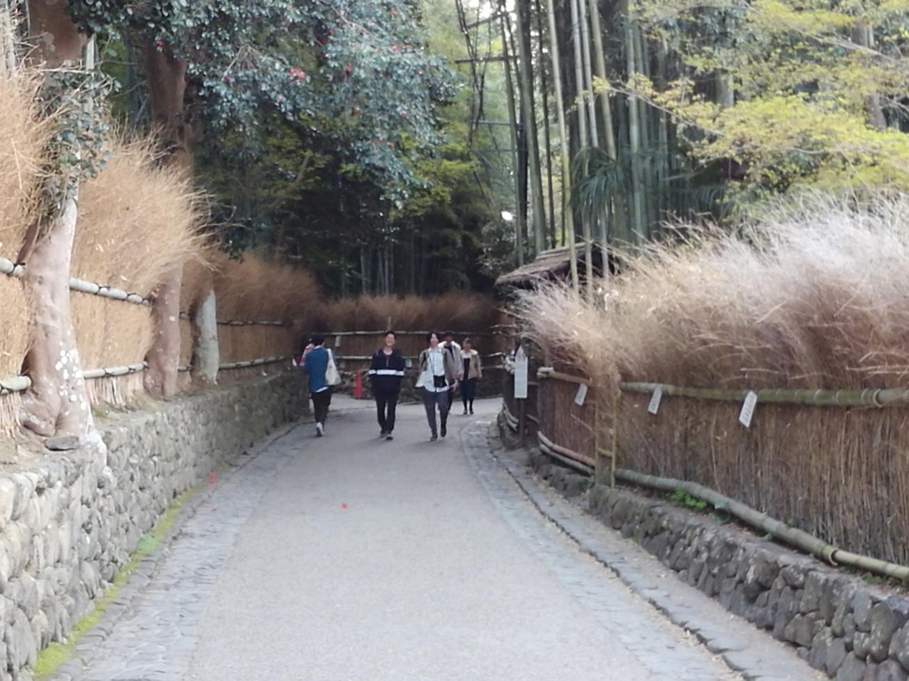 春の嵐山竹林の小道