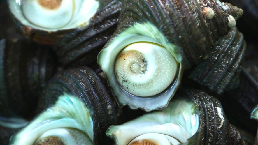 水床湾の透き通るような海で育った魚介類