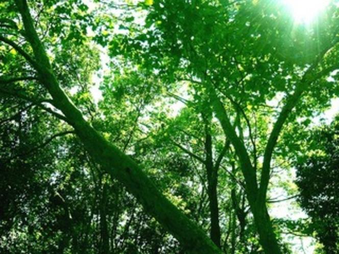 木洩れ日イメージ