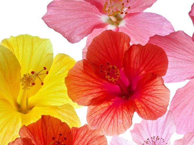 南国の花イメージ