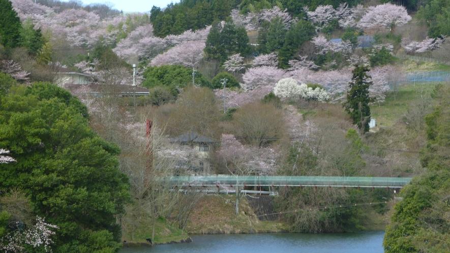 とっくり湖と桜
