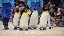 長崎ペンギン水族館(キングペンギンの散歩)