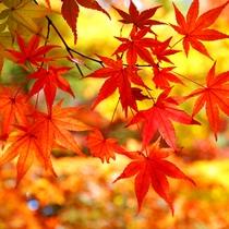 秋を感じて♪食欲の秋プラン