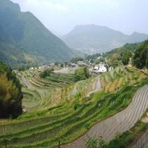 小豆島の原風景「中山の千枚田」
