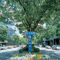◇仙台のメインストリート青葉通り。杜の都らしく緑がいっぱいです!