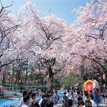 ◇仙台の桜の名所はやっぱり仙台西公園!ホテルから徒歩でも十分行けます!