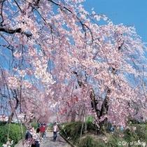 ◇仙台を代表するお花見の名所、そして市民の憩いの場所榴ヶ岡公園。