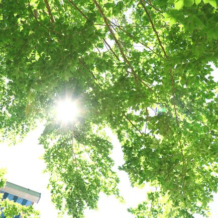 天気が良い日の木洩れ日