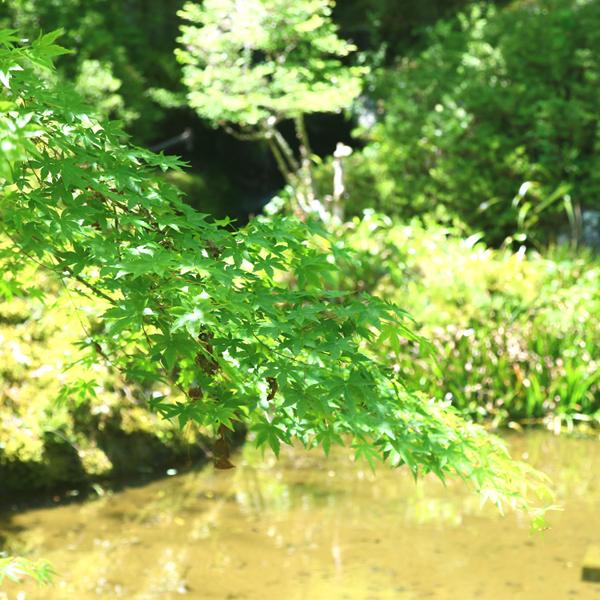 敷地内には生き物が多く生息する池も!
