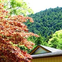 四季で移り変わる景色を楽しむ
