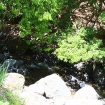 近くには川が流れており、夏には川遊びも!