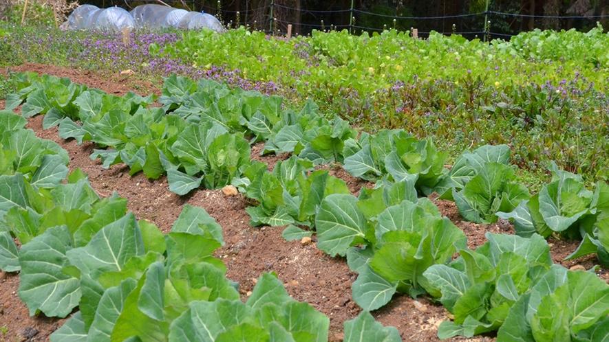 【自家農園】敷地内にある自家農園で採れた旬の野菜を夕食・朝食でお召し上がりいただきます。