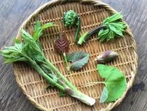 採れたての山菜や野菜