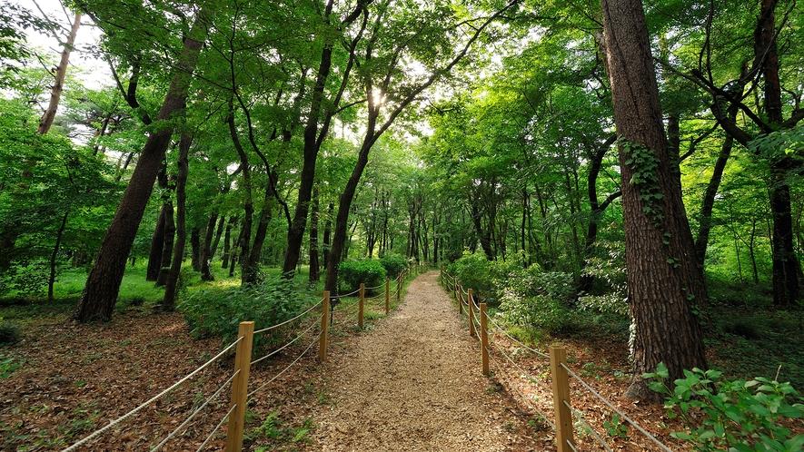 **【遊歩道(一例)】季節によって変化する昭和の森は、何度来ても新しい発見があります