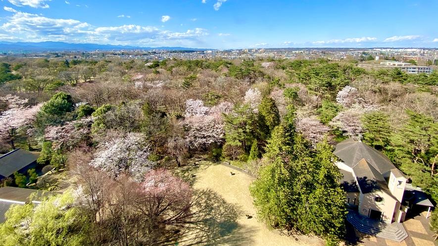 **【庭園・春(一例)】春の昭和の森は、生命の息吹を感じます