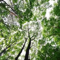 *【遊歩道(一例)】木々に囲まれた遊歩道は、自然に触れられるお散歩コースです